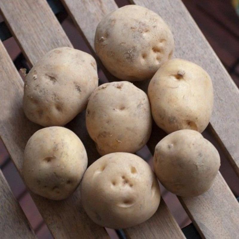 2018年秋野菜 生産者限定・有機JAS農産物  北海道/渡辺農産「じゃがいも」品種:北あかり、別名「黄金男爵」「クリじゃがいも」 5kg