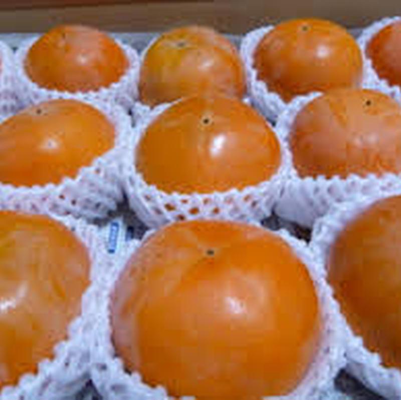 境川の富有(甘柿) 1箱(20個前後)