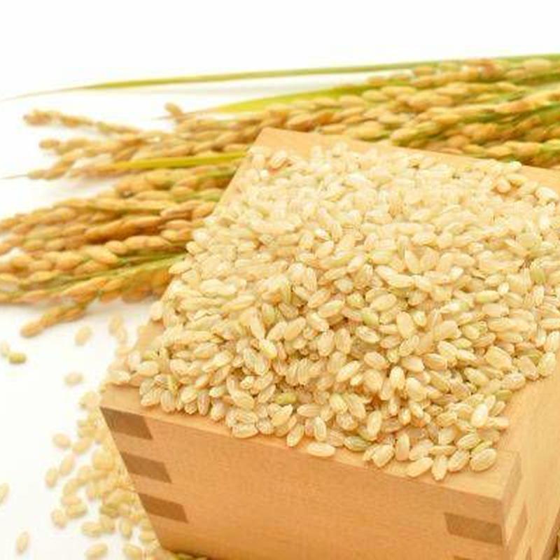 新米【 温故知新米 】玄米 5kg ー 農家さん直送