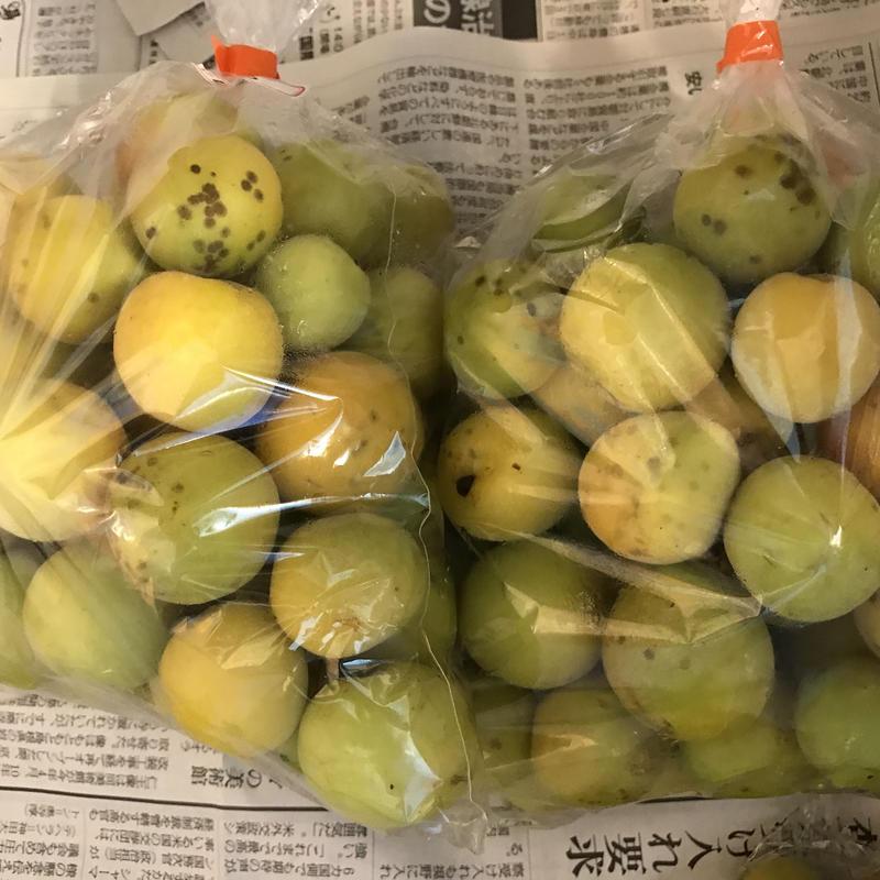 おおきな樹の完熟梅1kg※要冷蔵便