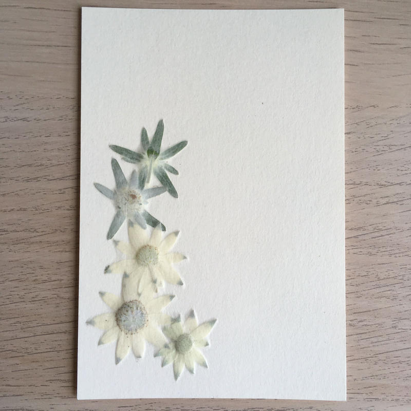 夏の光(Post Card)