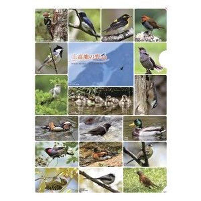 クリアファイル「上高地の野鳥」