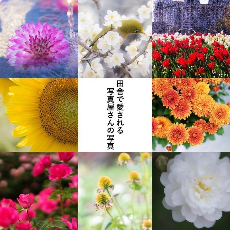 田舎で愛される写真屋さんの写真_花_300枚以上