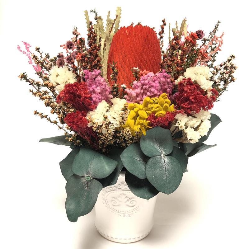 【大人気】バンクシアのポットアレンジメント(珍しいオーストラリアン・プリザーブド)母の日・お祝い・ご自分用・プレゼントに最適‼白い陶器のポットがおしゃれ!