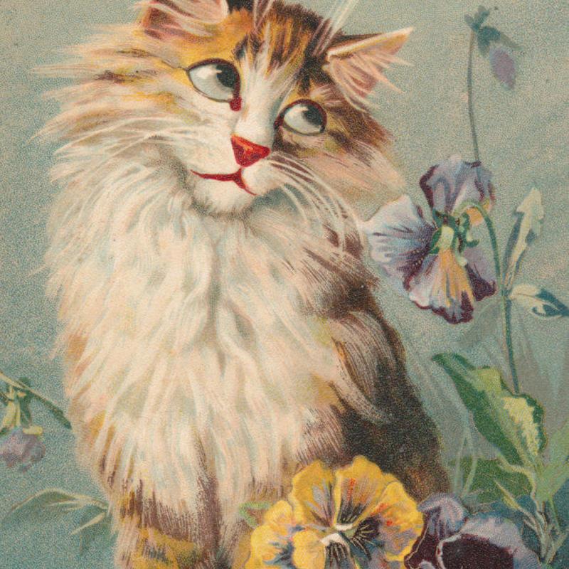 1905年フランス◆MAURICE BOULANGER◆パンジーと猫◆アンティークポストカード