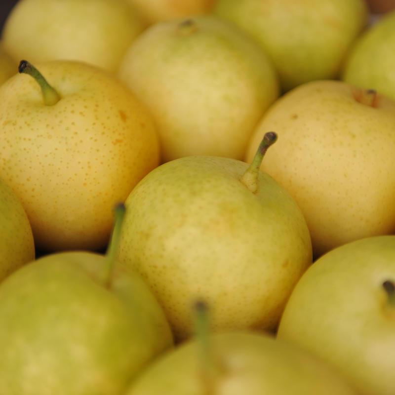 高崎里見梨二十世紀梨5kg