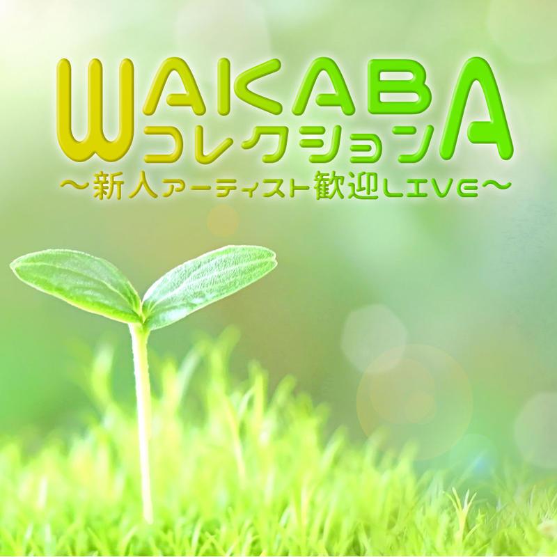 【Akari】WAKABAコレクション~新人アーティスト歓迎LIVE~【電子チケット】