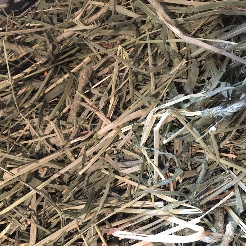 【RCオリジナル牧草】《30年度刈り》ロイヤルチモシー2kg