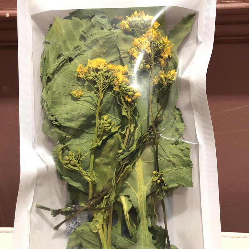 【らぱんな】菜の花