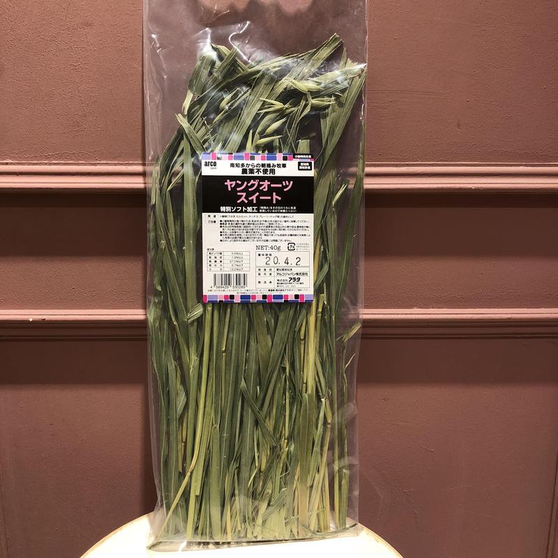 愛知県産ヤングオーツスイート  40g