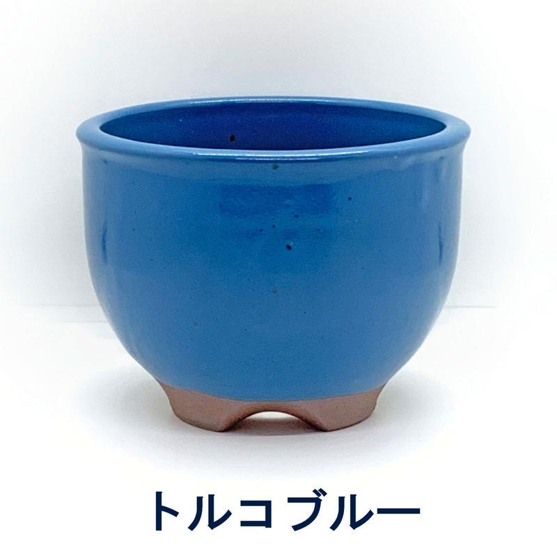 伝市鉢 サクラソウ型色付き 6号