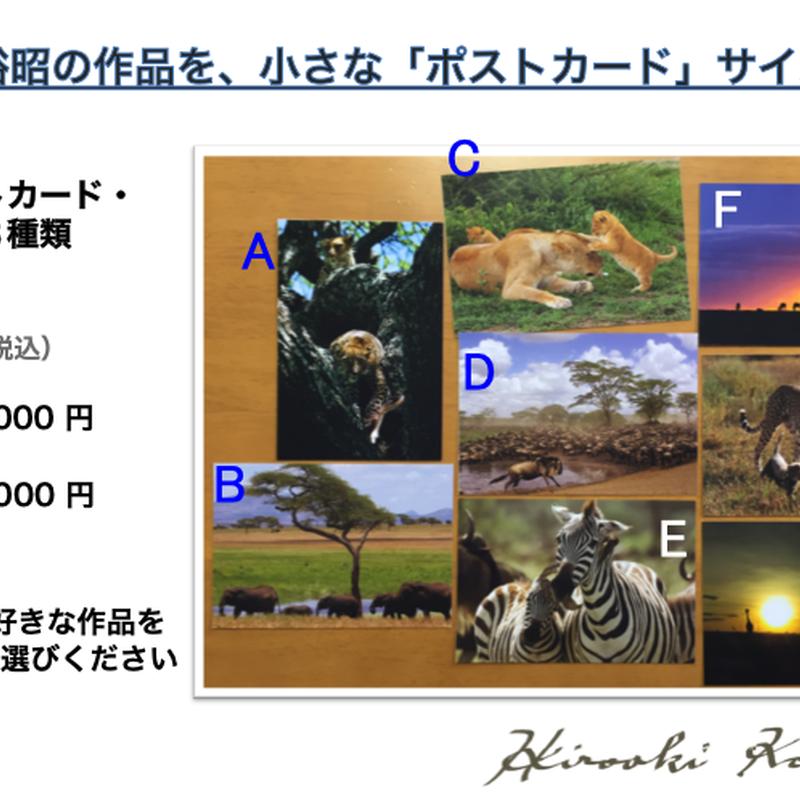 人気!!  アフリカ・ポストカード  -4枚セット販売-    (1枚あたり)