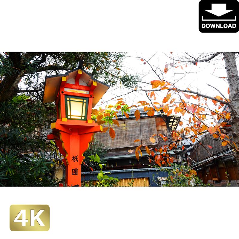 2043090 ■ 京都 祇園白川