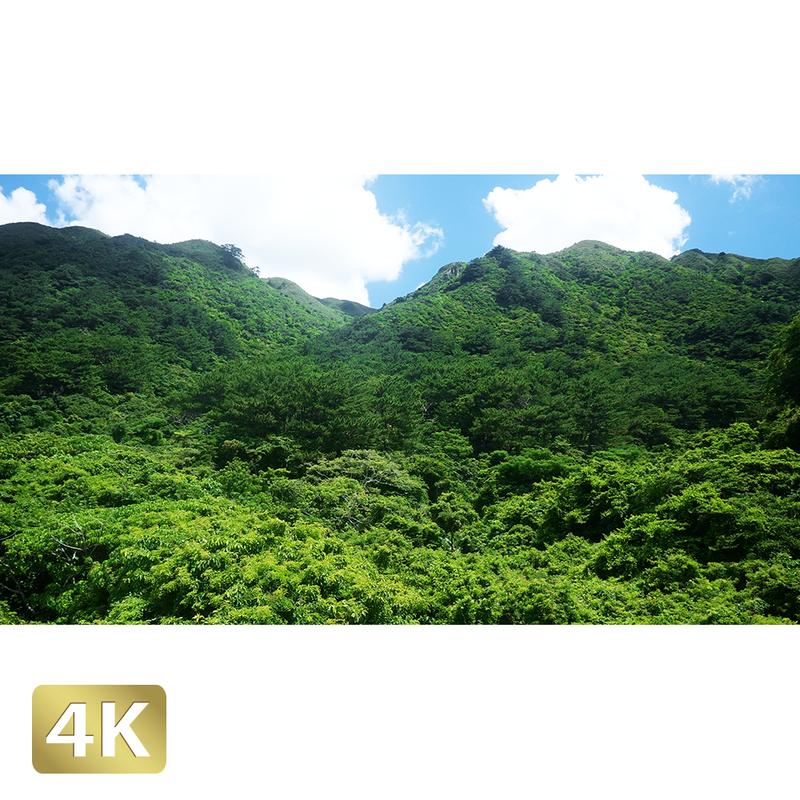 1038063 ■ 石垣島 於茂登岳