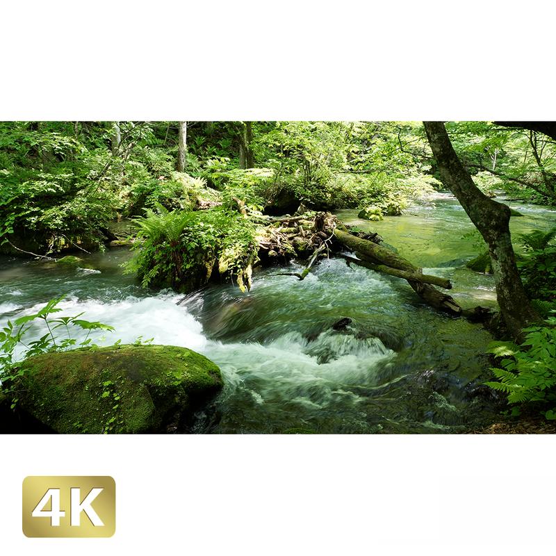 1035040 ■ 奥入瀬渓流 渓流