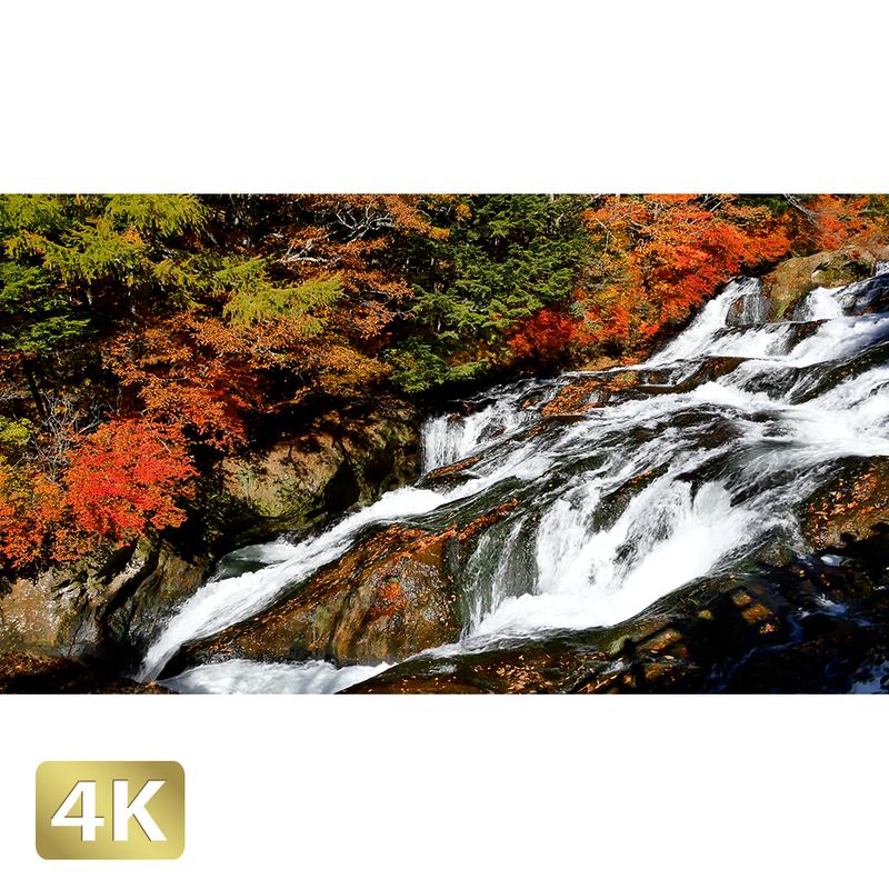 1014013 ■ 日光 紅葉 竜頭の滝