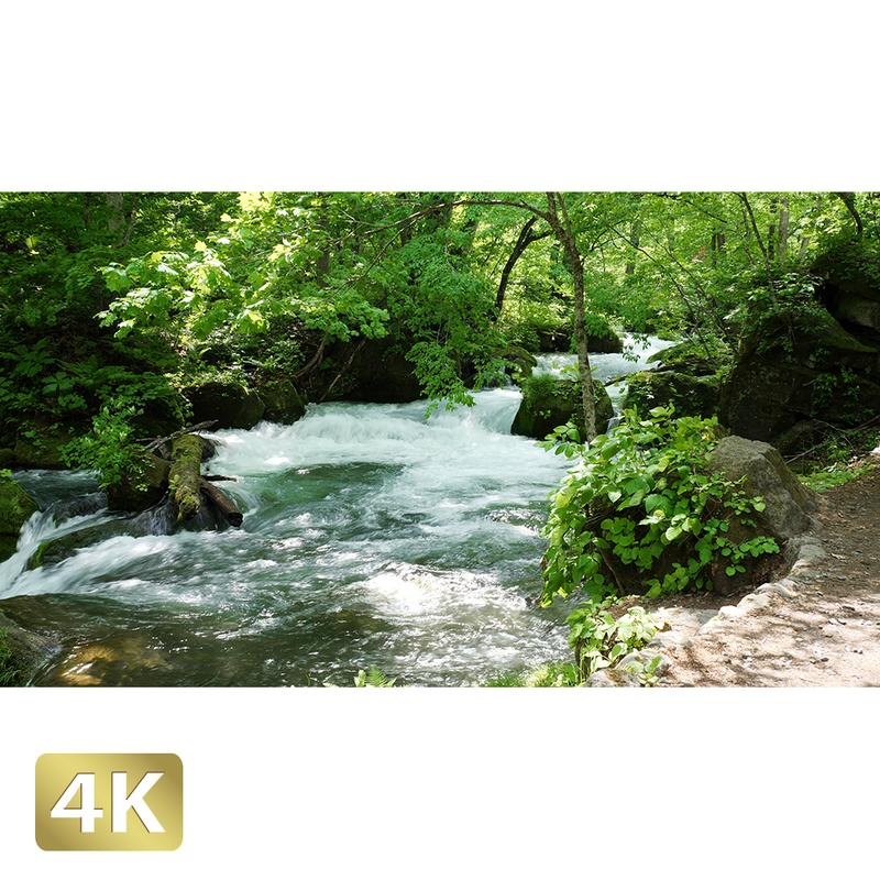 1035006 ■ 奥入瀬渓流 渓流