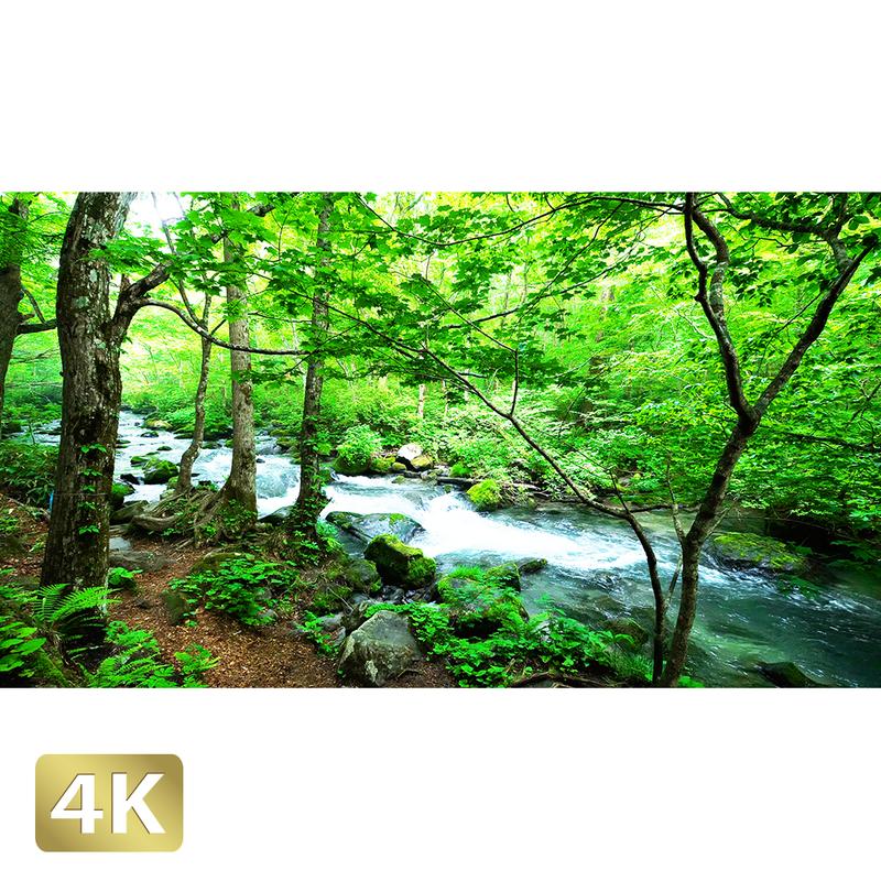1035020 ■ 奥入瀬渓流 三乱の流れ