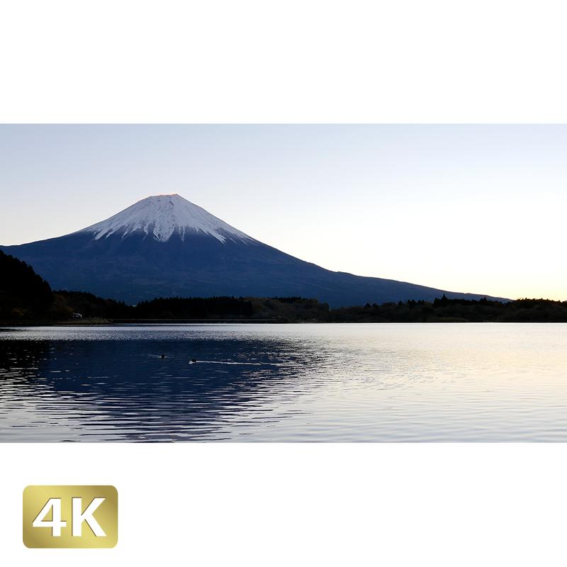 1018003 ■ 富士山 田貫湖