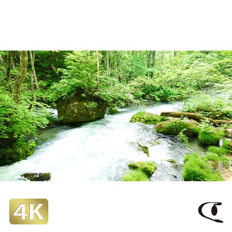 1035066 ■ 奥入瀬渓流 渓流