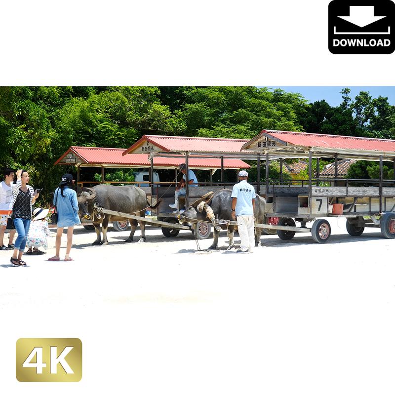 2039026 ■ 竹富島 牛車