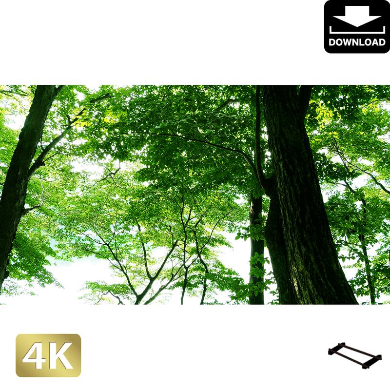 2003003 ■ 日光 中禅寺湖畔 林