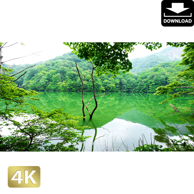 2036001 ■ 白神山地 鶏頭場の池