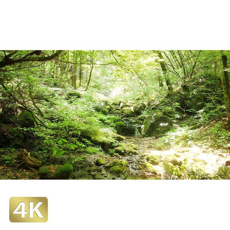 1037042 ■ 御岳山 ロックガーデン