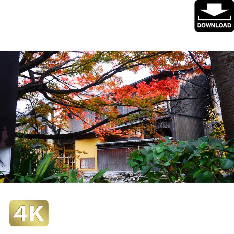 2043067 ■ 京都 祇園