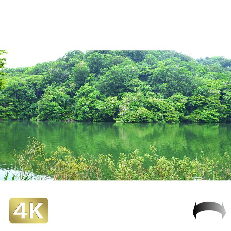 1036007 ■ 白神山地 十二湖 青池