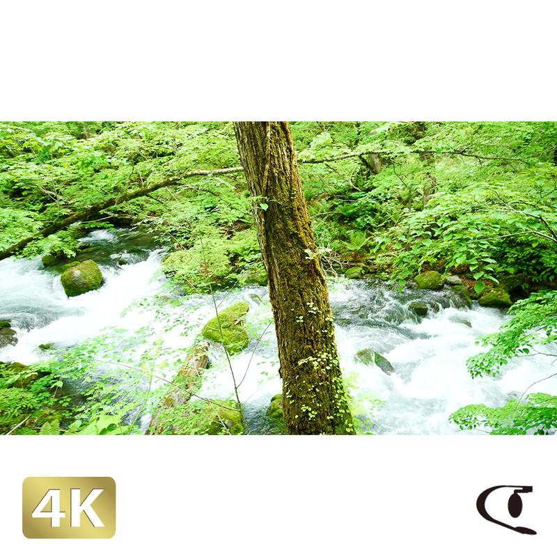 1035062 ■ 奥入瀬渓流 渓流