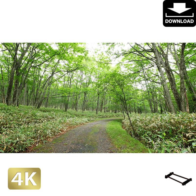 2002023 ■ 奥日光 光徳 林道