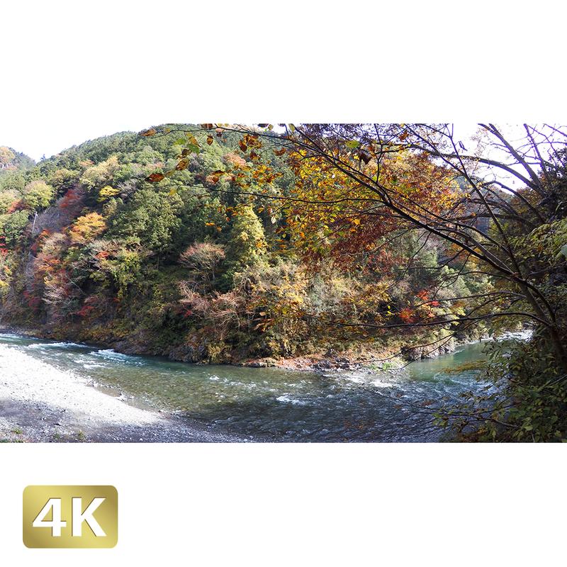 1017002 ■ 奥多摩 多摩川 紅葉