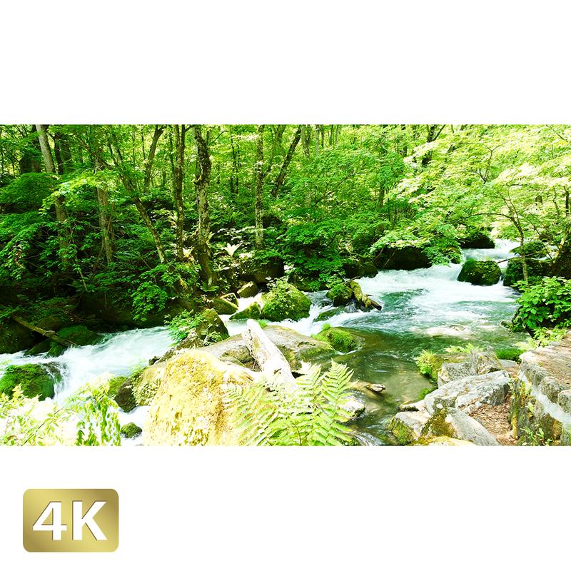 1035106 ■ 奥入瀬渓流 阿修羅の流れ