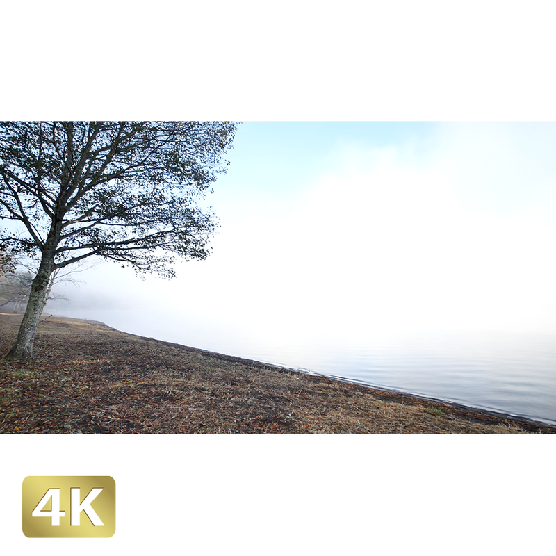 1015029 ■ 山中湖畔 紅葉