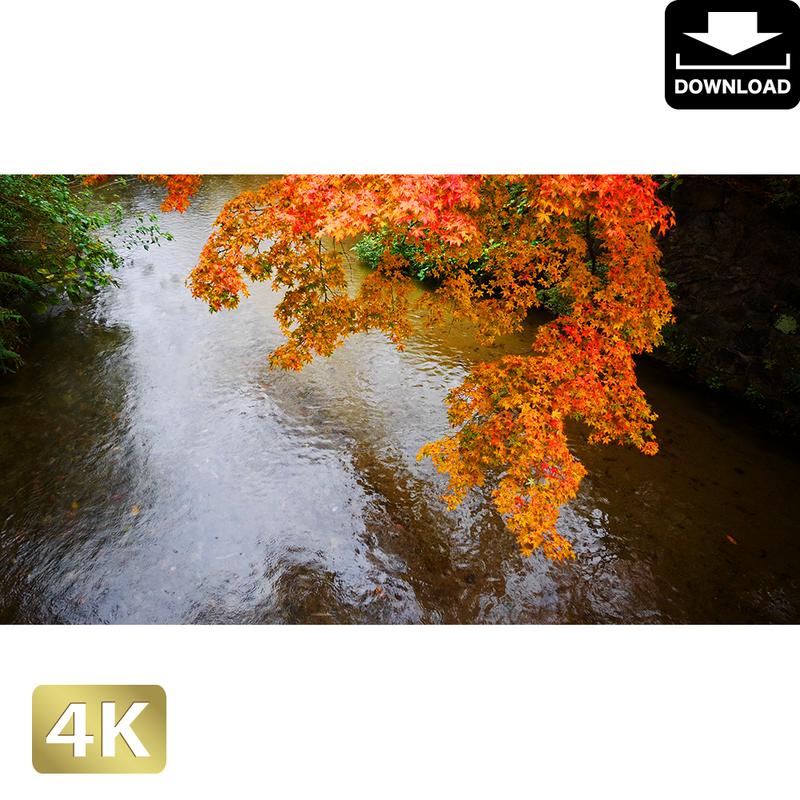 2043096 ■ 京都 祇園白川