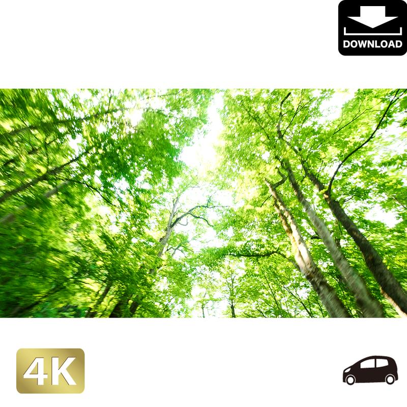 2035050 ■ 奥入瀬渓流 林道