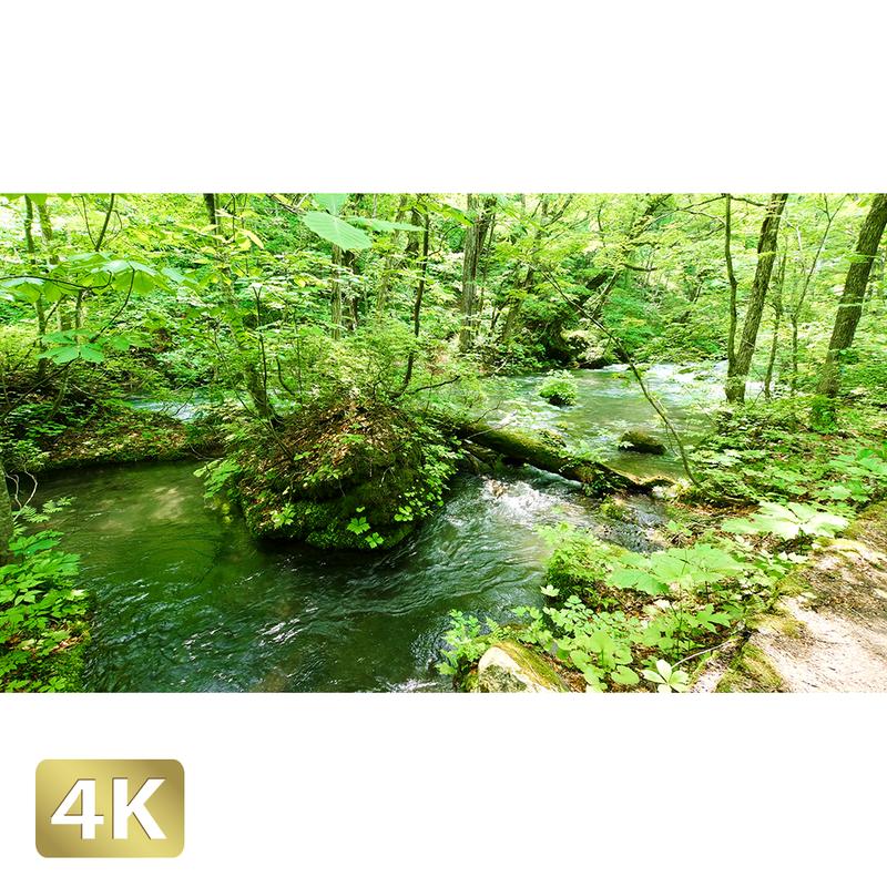1035054 ■ 奥入瀬渓流 渓流