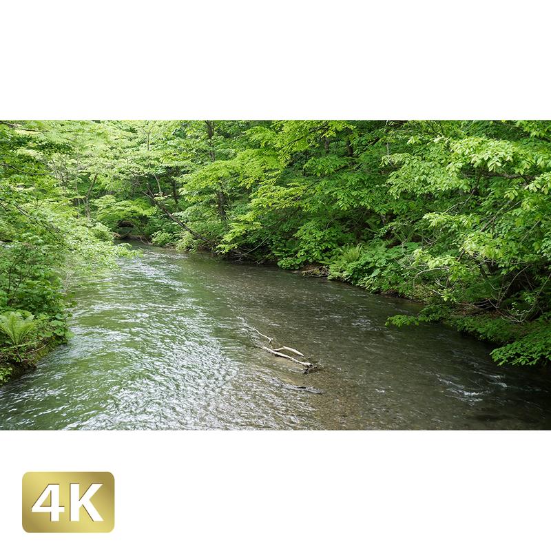 1035007 ■ 奥入瀬渓流 渓流