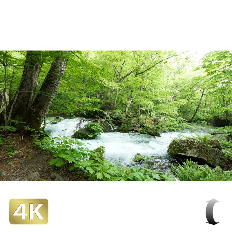 1035038 ■ 奥入瀬渓流 渓流