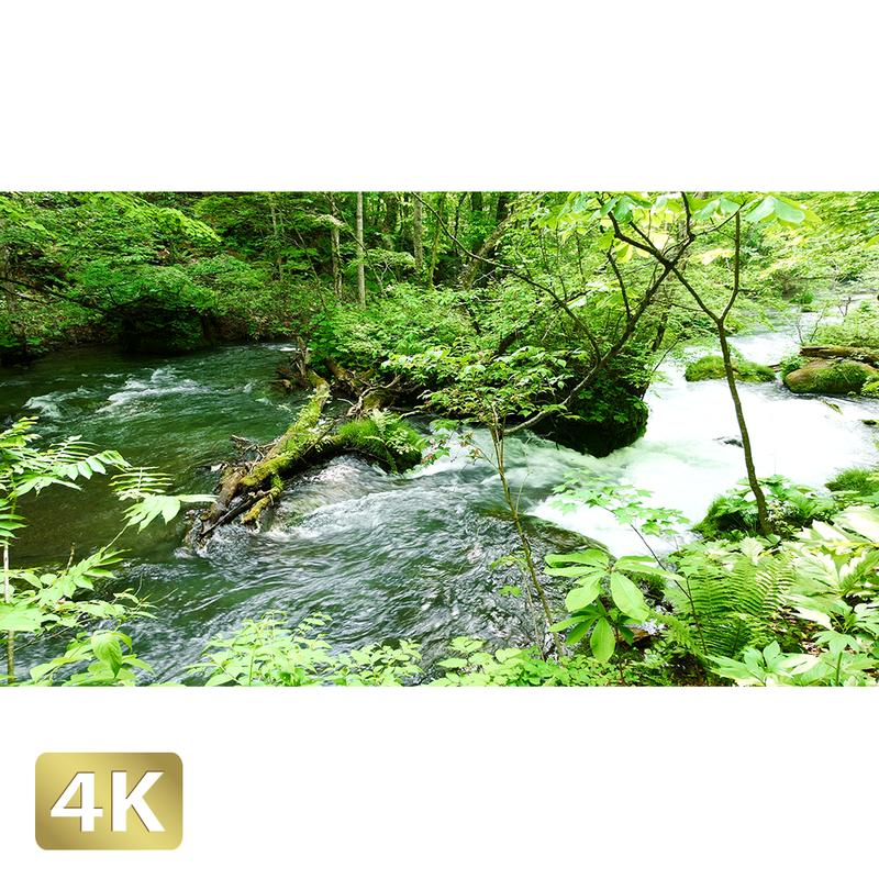 1035019 ■ 奥入瀬渓流 阿修羅の流れ