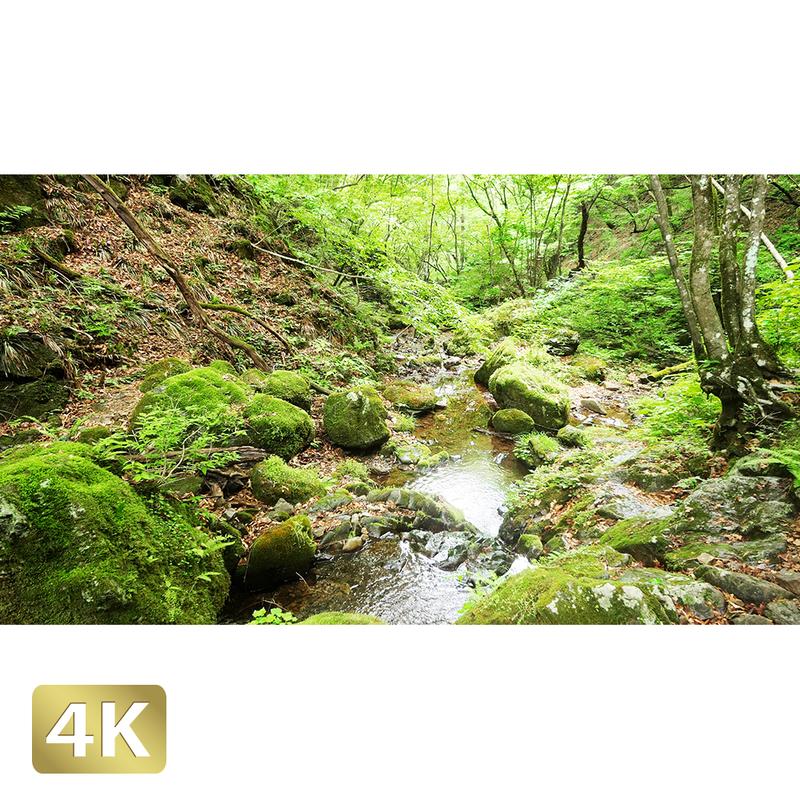 1037050 ■ 御岳山 ロックガーデン