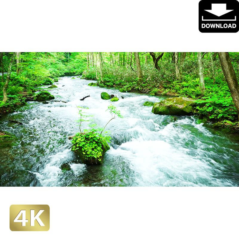 2035095 ■ 奥入瀬渓流 渓流