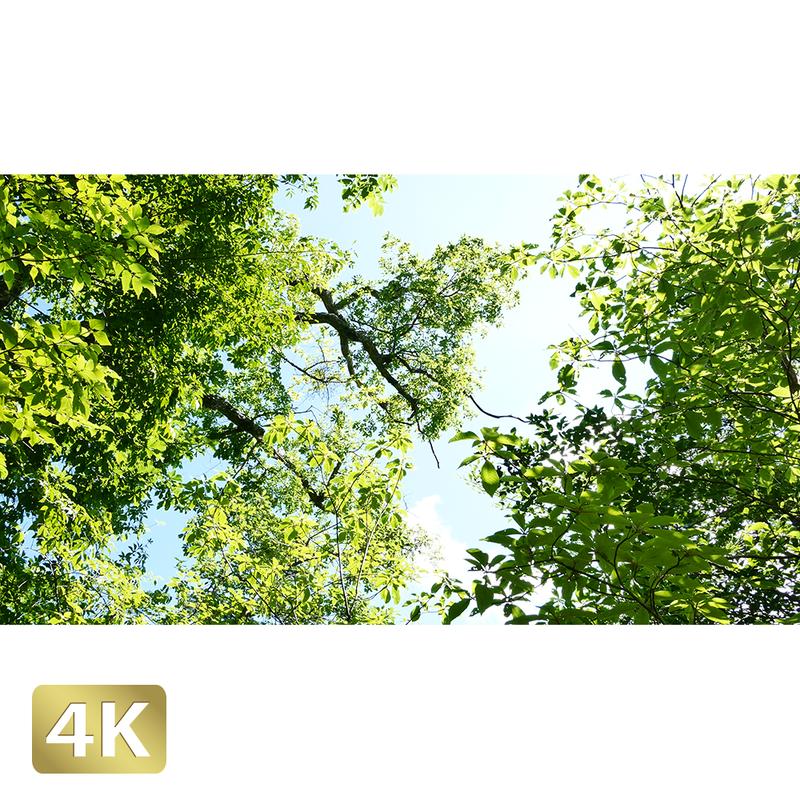 1005014 ■ 秋川渓谷 空 樹木