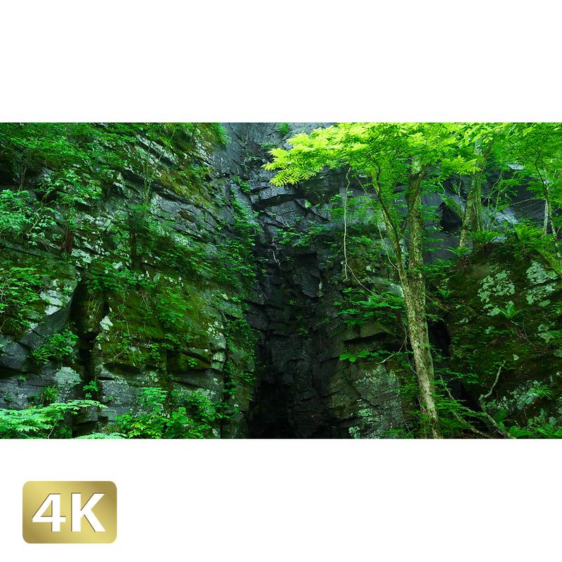 1035079 ■ 奥入瀬渓流 岩