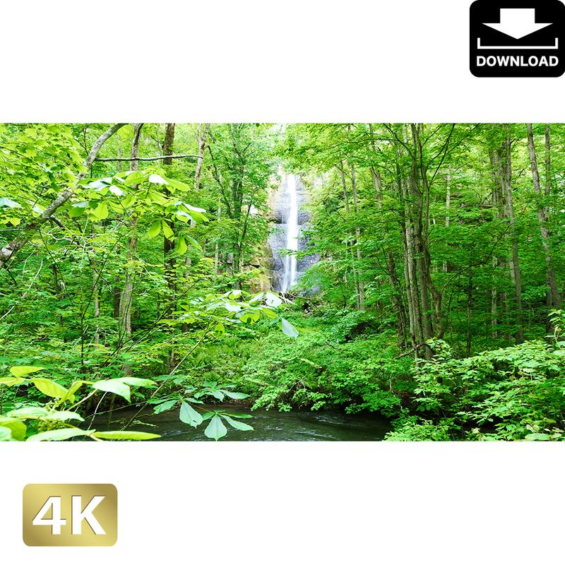 2035072 ■ 奥入瀬渓流 白布の滝