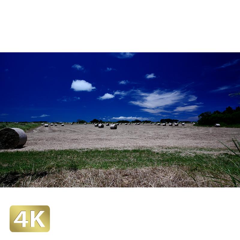 1026029 ■ 黒島 放牧場