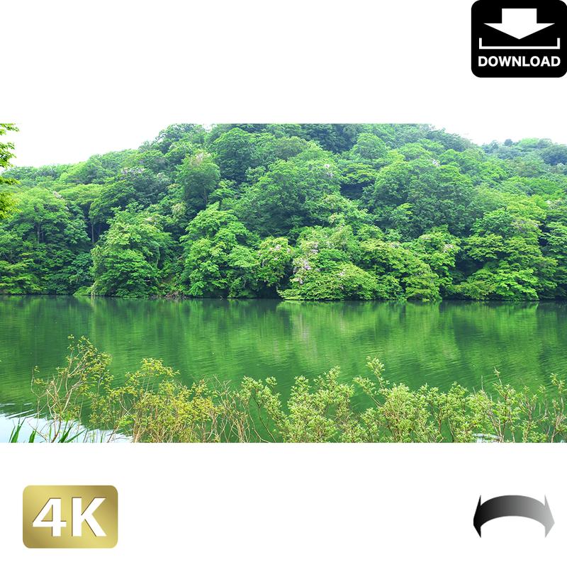 2036007 ■ 白神山地 青池