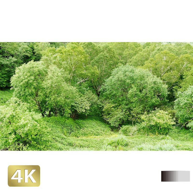 1003005 ■ 日光 半月山 樹木