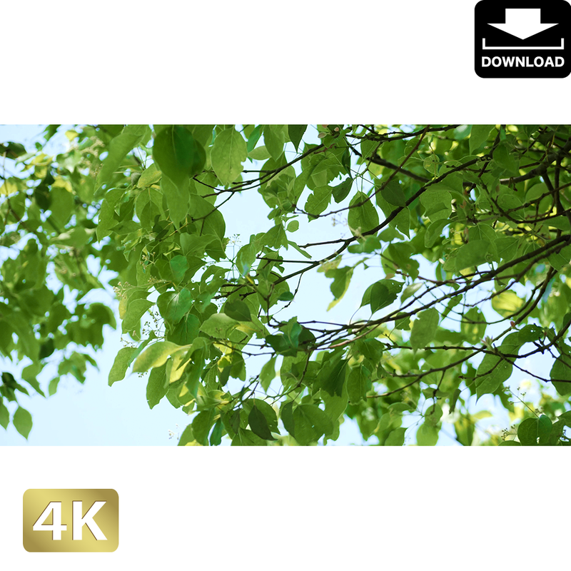 2034008 ■ 渡良瀬遊水池 樹木